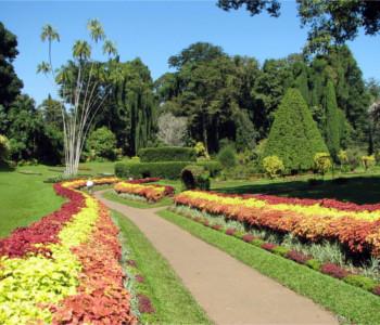 Programme pour célibataires à Colombo - Trincomalee - Kandy - Colombo 4