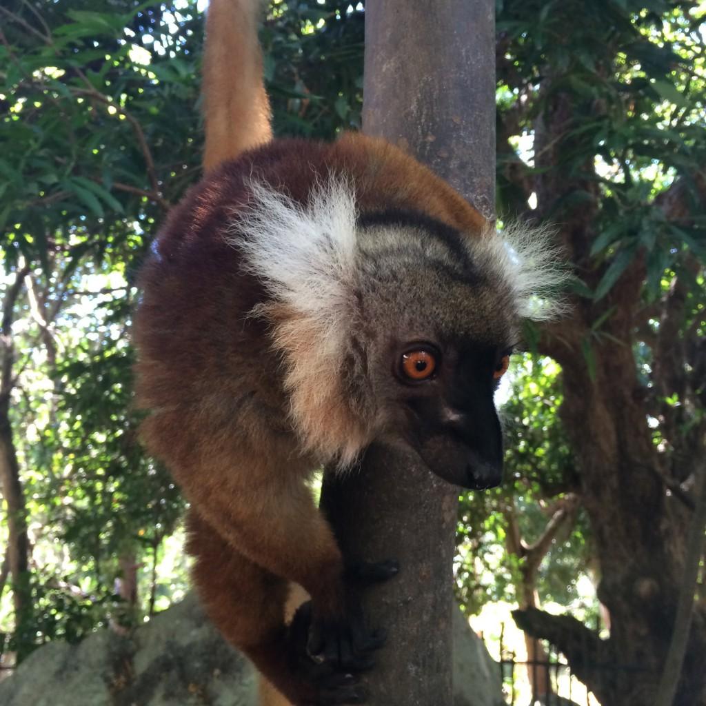 Programme pour célibataires à Madagascar - Nosy Be 5