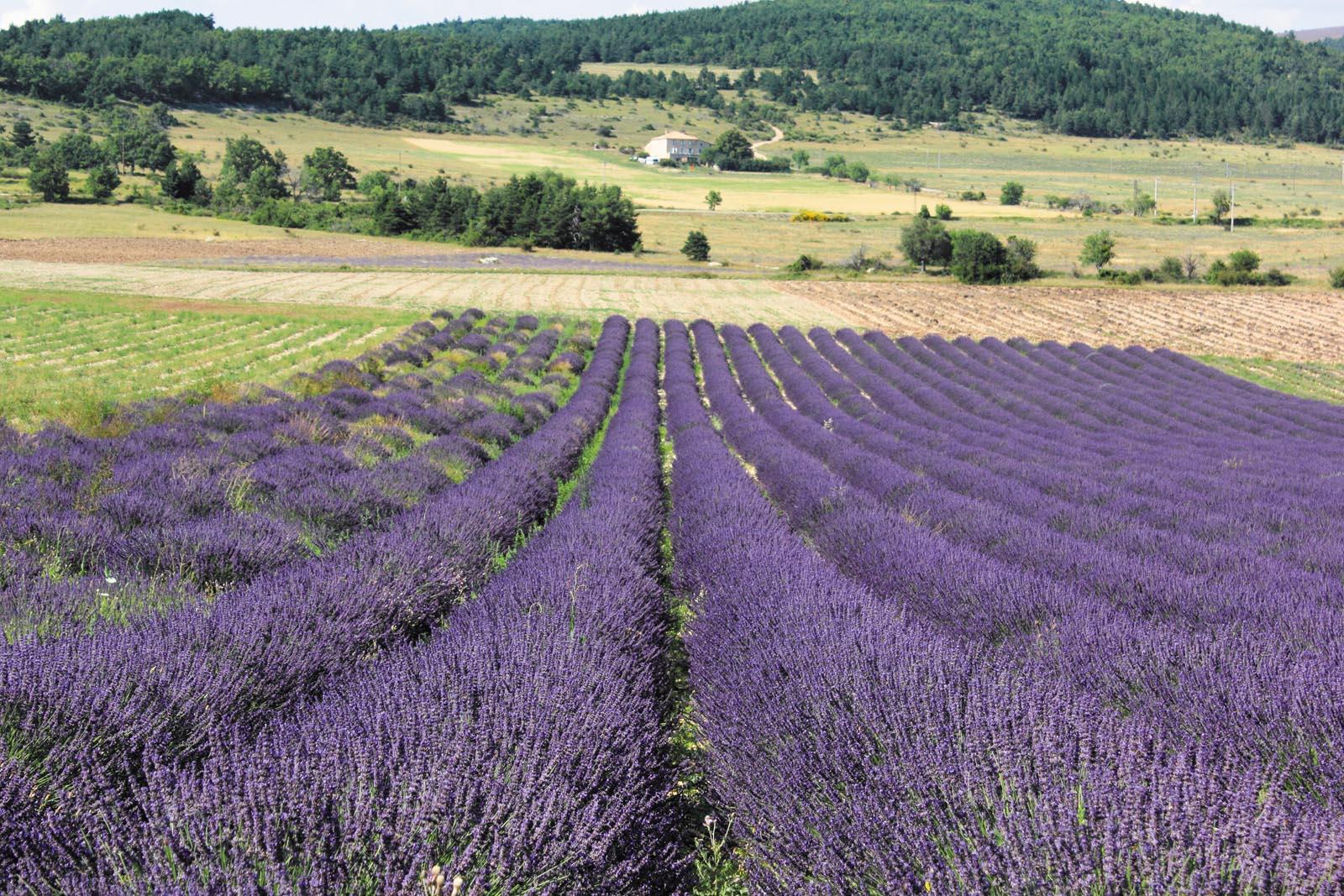 Programme pour célibataires à Provence 4